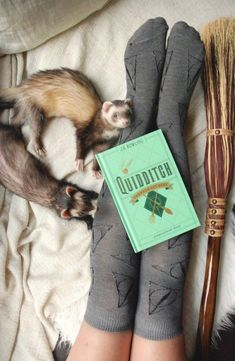 "the-book-ferret: """"Don't worry, the Weasleys are more than a match for the Bludgers — I mean, they're like a pair of human Bludgers themselves. Rowling, Harry Potter and the Sorcerer's Stone "" Cute Funny Animals, Funny Animal Pictures, Cute Baby Animals, Animals And Pets, Pet Ferret, Cute Ferrets, Harry Potter Tumblr, Cute Creatures, My Animal"