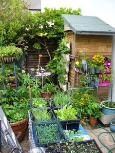small space gardening - look how much you can grow!
