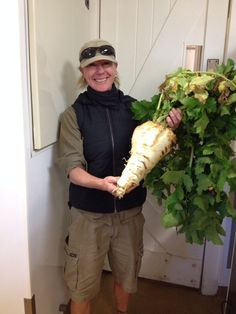 Is Jill, our gardener here at Cape, going after one of the Guinness World Records with this #turnip?! Soup for all! #gardening #vegetables