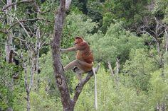 Bako national parc Malaysia