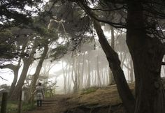 12 Hidden Gems In San Francisco Most People Don't Know Even Exist, Article from ONLY IN YOUR STATE?  #3 Mount Sutro