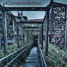 Los senderos que elijas, terminarán por forjar tu destino. #zaragozadestino #homoinstagramer #igerszgz #igersaragon #igerspain #igersworld http://instagram.com/unaimensuro