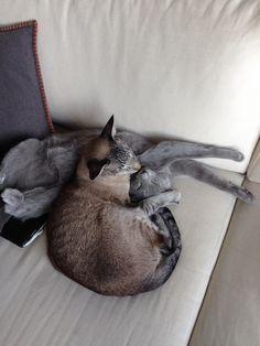Felix og storbror sover i den hvide sofa