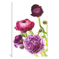 """Three Posts Spring Ranunculus VI Graphic Art on Wrapped Canvas Size: 40"""" H x 26"""" W x 0.75"""" D"""