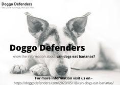 Can Dogs Eat Bananas, Kong Treats, Banana Treats, Dog Eating, Defenders, Cherries, Small Dogs, Pup, Knowledge