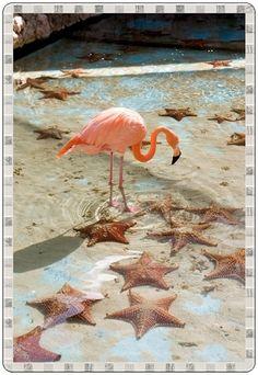 Deniz yıldızı ile Flamingo