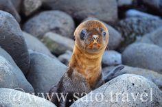 A curious baby sea lion.
