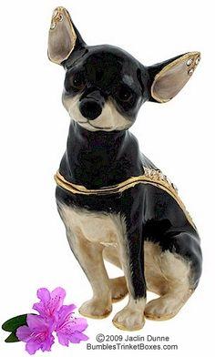 62444- Chihuahua Sitting- Dark