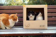 TV속 고양이