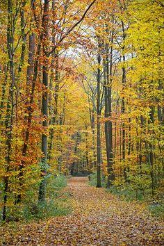 Autumn, Autumn Forest, Forest