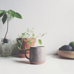 plants and coffee mugs.....i'm in love