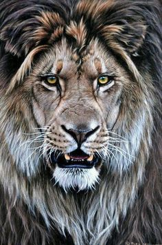 Draw Cats Original Lion Paintings - Alan M Hunt Wildlife Artist UK Animals And Pets, Cute Animals, Wild Animals, Baby Animals, Lion Love, Lion Wallpaper, Lion Painting, Creation Art, Lion Art