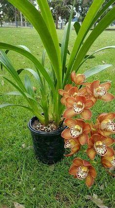 orchid                                                                                                                                                                                 Más