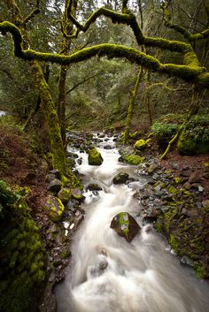 Landscape of a mossy forest and river in California