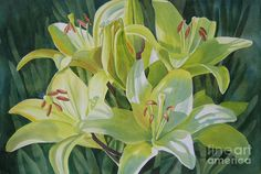 Yellow Lilies With Buds Painting by Sharon Freeman - Yellow Lilies With Buds Fine Art Prints and Posters for Sale