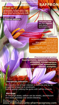 Saffron flowers benefits. Infographic. Summary of the general characteristics of the Saffron plant. Medicinal properties, benefits and uses more common of Saffron. http://www.medicinalplants-pharmacognosy.com/herbs-medicinal-plants/saffron/benefits-infographic/