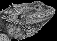 Bearded Dragon Ink Drawing. Signed by Artist by TimJeffsArt