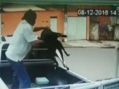 Câmeras de ONG flagram criminoso abandonando cachorro