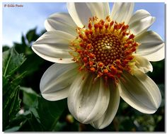 They brought a quilled, yellow dahlia...   Gilda Pontes