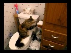 Watch These Cats Battling Toilet Paper Rolls — Daily Distraction Hysterically Funny, All About Cats, Toilet Paper Roll, Paper Cover, Cats And Kittens, Devil, Kitty, Pets, Animals