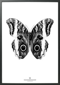 The phenomenal butterfly The graphic butterfly from our BW series looks amazing printed black and white in 70*100cm. For more info look at House of Bæk & Kvist