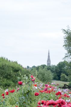 Poppy Path to Town Newark On Trent, Poppy, Paths, Homes, Mountains, Nature, Travel, Houses, Naturaleza