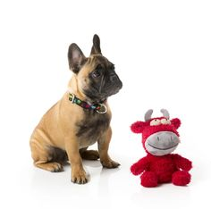 Keep your furry friend happy. Despite being super plush, Dog Toy Jordan the Bull is tougher than he looks! Floppy Limbs for Dog Interaction. Dog Toys, Goats, French Bulldog, Your Dog, All About Time, Jordans, Plush, Challenges, Bull Dog