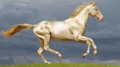 Úžasné! Tento rozprávkovokrásny kôň vyzerá ako odliaty zo zlata