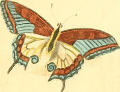 """Image from page 210 of """"A natural history of birds, fishes, reptiles, and insects"""" (1845) 