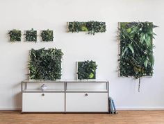 Real plants naturally preserved - With styleGREEN plant pictures you bring a snapshot of nature to your wall. Green Paint Colors, Paint Color Schemes, Unique Plants, Exotic Plants, Real Plants, Indoor Plant Wall, Indoor Plants, Moss Wall Art, All About Plants