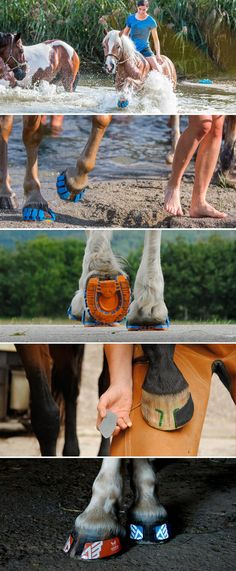Megasus Horserunners - For Horses and Horse Lovers. by Megasus Horserunners — Kickstarter