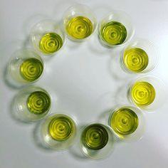 10 assaggi per 10 capolavori italiani! Oli extravergini d'oliva.