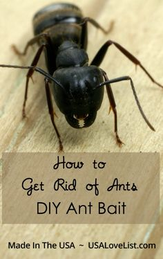 Wondering how to get rid of ants? We've got the recipe and tips for how to get carpenter ants out of your home using homemade Borax ant bait.