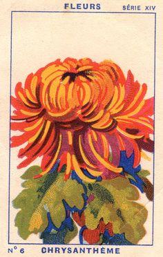 milliat fleurs004   patricia m   Flickr Art Inspo, Kunst Inspo, Inspiration Art, Art And Illustration, Illustrations, Botanical Illustration, Riso Print, Palette Pastel, Bel Art