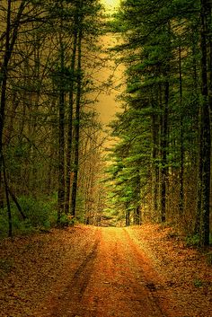 Road through the piney wood. where does the road lead? Like our future nobody knows what lays ahead over the hill.