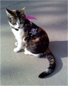 www.mpharnesses.com    Cat Harness size 1