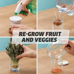 Regrow Vegetables, Planting Vegetables, Growing Vegetables, Easy Plants To Grow, Growing Plants, Garden Crafts, Garden Projects, Garden Ideas, All About Plants