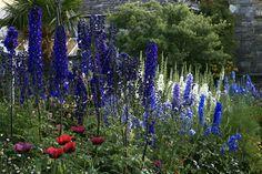 The Dillon Garden, Ranelagh, Dublin 6 - Dublin Garden Group Arbors Trellis, Fence Doors, Purple Garden, Backyard, Patio, Pathways, Dublin, Beautiful Gardens, Water Gardens