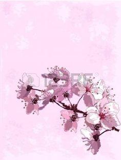 fleur de cerisier: Fond de printemps avec des cerisiers en fleur