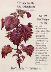 Rockin' The Kitchen: What is red shiso, and why did I buy it?