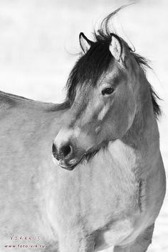 Vyatka horse by ~Vikarus on deviantART