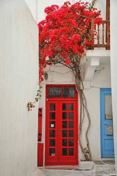 Vivid red door against white stucco in Mykonos, Greece, with equally magnificent bright red colorful climbing vines. Brilliantly colorful curb appeal and inspiring architecture and use of color.