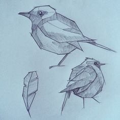 #birds #sketches illustrated by Alana Mays.  www.alana.nz @alanamayscreative  #etsystore #alanamayscreations
