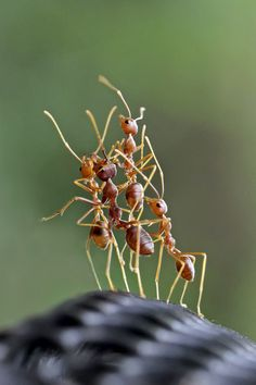 Tell this story- Remember that YOU are an ant-sized person watching (or being part of the group). Macro Photography, Amazing Photography, Writing Pictures, Foto Poster, A Bug's Life, Bugs And Insects, Natural Wonders, Thing 1, Ants