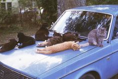 When cats take over your car... | @theluxeboheme