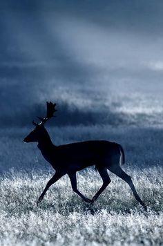 reindeer or caribou? Beautiful Creatures, Animals Beautiful, Cute Animals, Wild Animals, Bambi, She Wolf, Oh Deer, Stag Deer, Mundo Animal