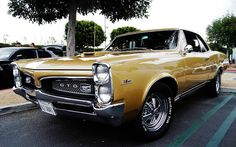 '67 Tiger Gold Hurst GTO