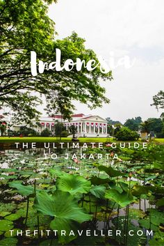 Ultimate Travel Guide to Jakarta, Indonesia | Top Things to do in Jakarta. Our Ultimate Jakarta Travel Guide includes the top things to do in Jakarta Indonesia from where to stay to where to eat, what to see and must see sights. *********** Where to stay in Jakarta | Jakarta Hotels | Things to do in Jakarta | What to do in Jakarta | Tourist Sights Jakarta | Where to Eat in Jakarta | Jakarta Museums | Where to Shop in Jakarta |