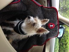 The only dog safety seat officially crash tested. Car Seats For Dogs Is A Gift of Love: PUPSAVER on Bark and Swagger