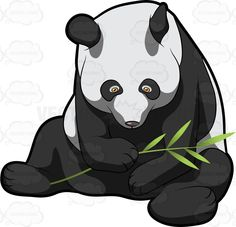 #adorable #Ailuropodamelanoleuca #animal #animalkingdom #bamboo #bamboobear #bearcat #big #black #blackears #bow #branch #carnivora #catfoot #china #content #contented #coonbear #cuddly #cunning #cute #eating #endearing #eyepatches #fat #felicitous #fleshly #giantbearcat #giantpanda #glad #grass #grasses #greens #happy #heavy #herbivore #herbivorous #huge #leaf #leaves #looking #lovable #lovely #m